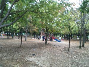 木場公園_森